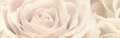 Декор роза 25*75