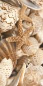 Декор Sea Breeze Shells бежевый 30*60