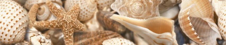 Фриз Sea Breeze Shells бежевый 30*6